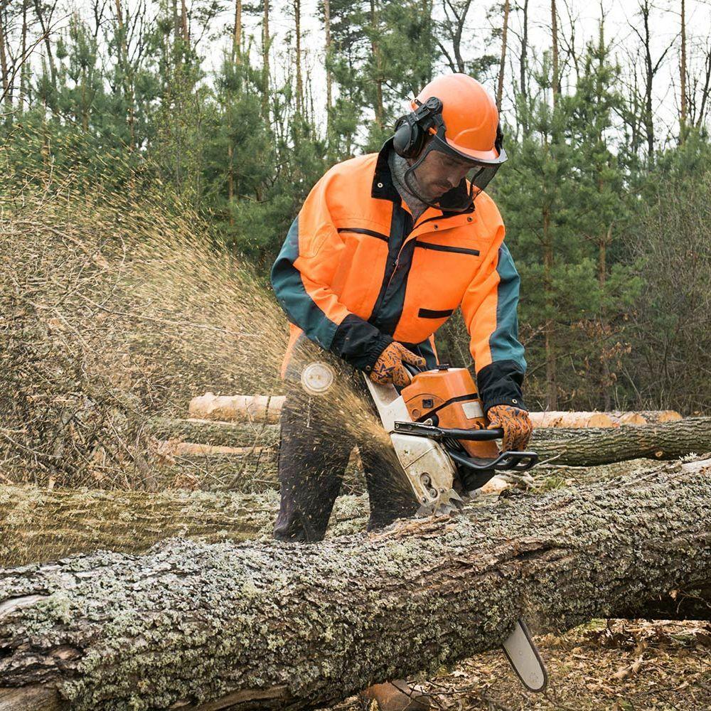 Técnico en Aprovechamiento y Conservación del Medio Natural